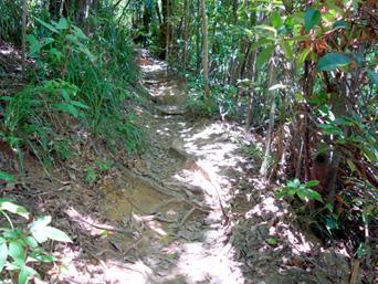 ピナイサーラの滝上への道