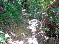 西表島のピナイサーラの滝上への道