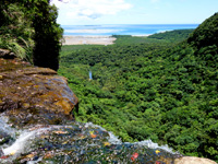 西表島のピナイサーラの滝上からの景色 - 水落と景色を一緒に楽しめます
