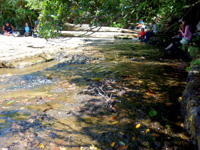 西表島のピナイサーラの滝上のせせらぎ - ツアーの人が多く居ます