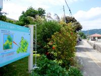 西表島の船浮マップ/船浮集落案内図 - 浮き桟橋と集落の間にあります