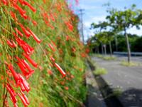 西表島の崎田橋周辺の写真