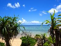 西表島のまるまビーチ - まるま荘からならダイレクトで行けます