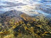 西表島のまるまビーチ - 干潮時は泳がなくてもサンゴが望める