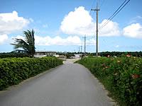 由布島への道の口コミ