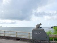 西表島の仲間川/仲間橋/遊覧船 - 仲間橋のイリオモテヤマネコ2