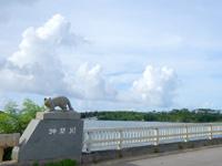 西表島の仲間川/仲間橋/遊覧船 - 仲間橋のイリオモテヤマネコ3