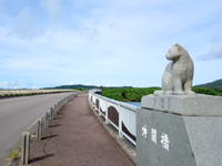 西表島の仲間川/仲間橋/遊覧船 - 仲間橋のイリオモテヤマネコ4