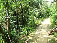 浦内川滝巡り遊歩道