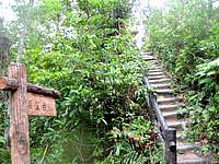 西表島のマリユドゥの滝展望台 - 遊歩道から階段を上るとたどり着けます