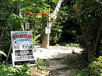 西表島のふしぎ植物(船浮・閉鎖)