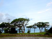 石垣島の唐人墓 - 道路の向こうに海も望めます