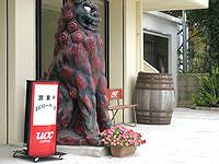 石垣島のおいシーサー遇の写真