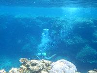 石垣島の崎枝ビーチの海の中の写真