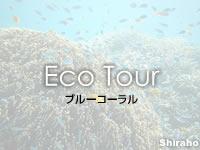 八重山列島 石垣島のブルーコーラルの写真