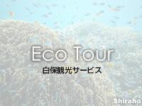【シュノーケリングツアー】白保観光サービス(八重山列島/石垣島のエコツアー/マリンツアー)