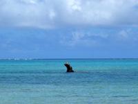 石垣島の明石海岸 - 特徴的な岩があるので探してみましょう
