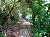 石垣島の屋良部崎南ビーチの写真
