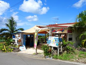 石垣島のヨネヤシ/プカシェル/Yone Yashi&Puka Shell「米原ヤシ林の入口にあります」