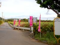 石垣島のたふく農園/田福農園 - 幹線道路からは別の農園前を経由