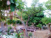 石垣島のたふく農園/田福農園 - 庭園内には池があって植物が豊か