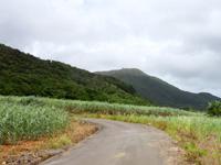 石垣島の於茂登岳登山道までの道の写真