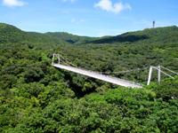 石垣島のパンナ岳公園東/バンナ岳公園東 - 緑に映える白くて綺麗な橋