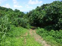 石垣島の野底崎/野底南のビーチ - 草むらを抜けた先がビーチ
