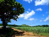 石垣島の平野ビーチ - 正面が灯台!この木が見えたら右へ