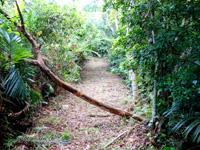石垣島の前勢岳展望台 - 展望台までの道のりは強烈!