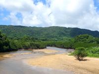 石垣島の吹通川・ヒルギ群落 - 西表島のような光景!