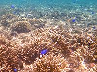 石垣島の米原ビーチインリーフ - 浅瀬でも海では絶対に立たないこと!