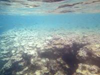 石垣島の米原ビーチアウトリーフ