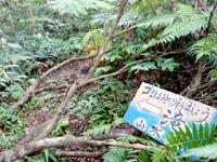 石垣島の於茂登岳の滝 - 登山道のこの看板の脇道の先
