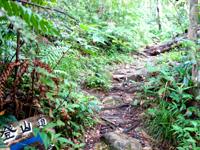 石垣島の於茂登岳の滝 - 登山道に戻ると案内があって親切