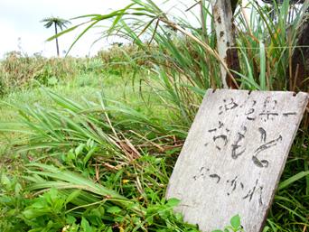 石垣島の於茂登岳頂上1(鉄塔側)「頂上の証の看板は風で飛ばされているかも?」