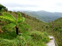 石垣島の於茂登岳頂上2(ダム側)の写真