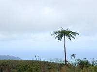 石垣島の於茂登岳からの景色1(鉄塔側)の写真