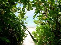 石垣島の川平タバガー/撮影場 - 草むらを抜けた先にビーチがあります