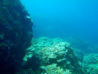 御神崎の海の中