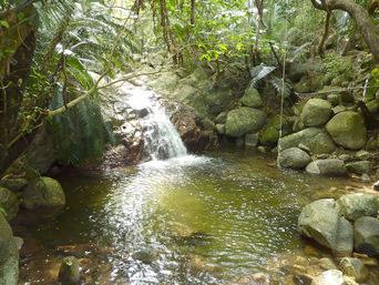 石垣島の荒川の滝
