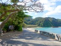 奄美諸島 加計呂麻島の諸鈍長浜のディゴの並木の写真