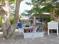 加計呂麻島の諸鈍長浜のディゴの並木 - 並木の中にはカフェやたこ焼き屋も!?