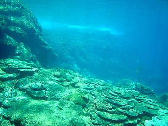 加計呂麻島の徳浜海岸アウトリーフ「アウトリーフは急激に深くなっています」