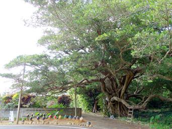 加計呂麻島の西阿室の集落