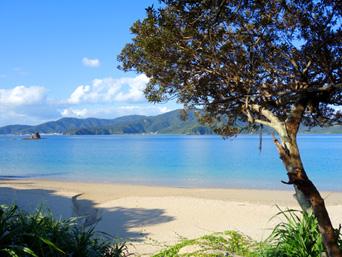 加計呂麻島の渡連海岸「波が穏やかなビーチです」