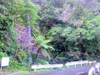 加計呂麻島の嘉入の滝/ウティリミズヌ瀧 - 落差は結構あります