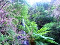 加計呂麻島の嘉入の滝/ウティリミズヌ瀧 - 滝壺は小さくて降りれない