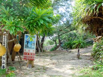 加計呂麻島のケンムン茶屋「人気は無いけど猫はいた(笑)」