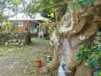 加計呂麻島のカフェ ホットリップス - 軒先にあるこの根っこというか幹が目印